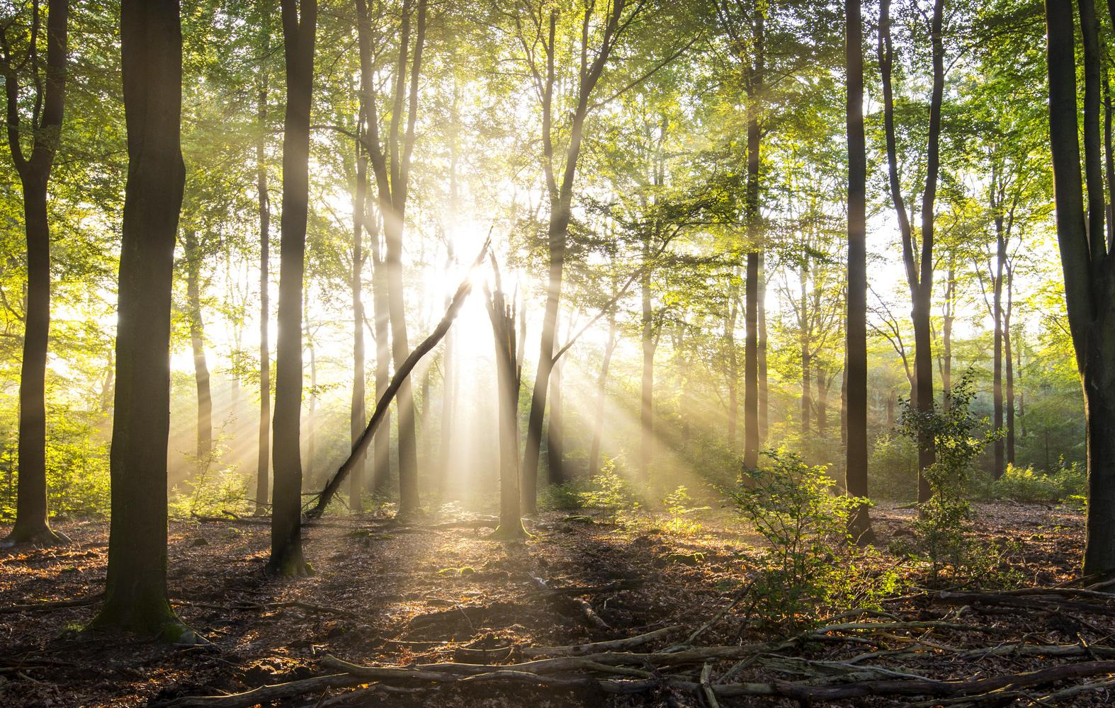 Rays of light in a forest in summer